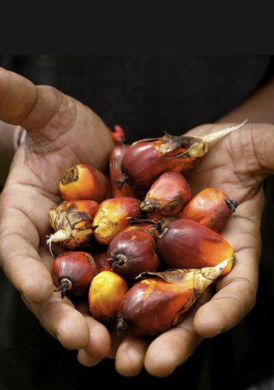 ¿Qué es el aceite de palma y cuál es su problema?