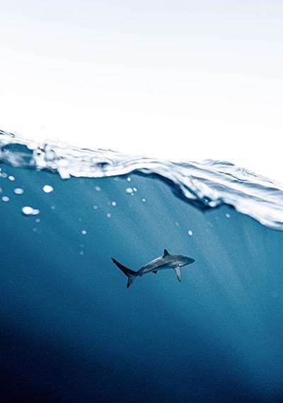 3 recomendaciones sobre el cuidado del entorno marino