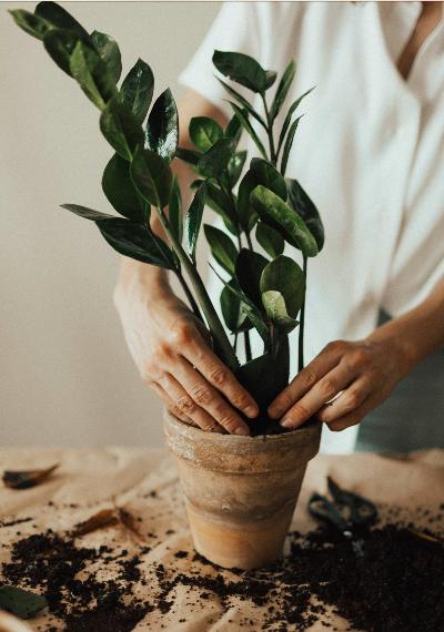 Cómo hacer abonos orgánicos en casa